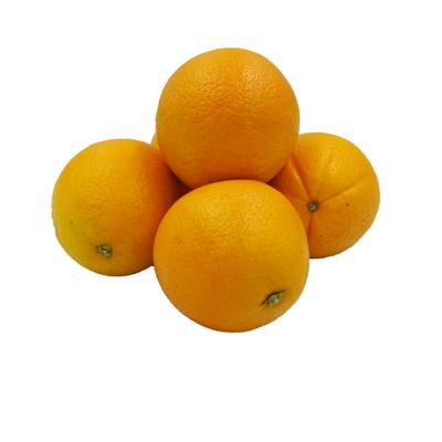 ส้มซันควิกซ์