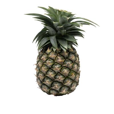 สับปะรดแกง-1.5-กก.-ต่อลูก